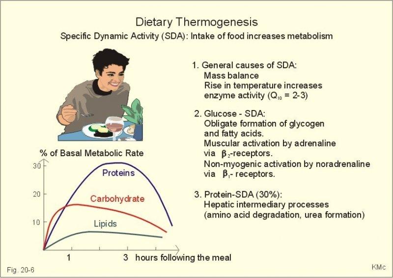 Dietary Thermogenesis.jpg