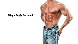 Equipoise- The Muscle Enhancer And More